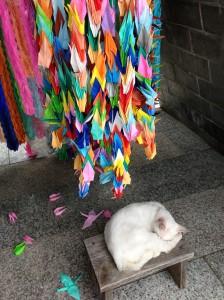 長崎県、平和公園の下に猫が...